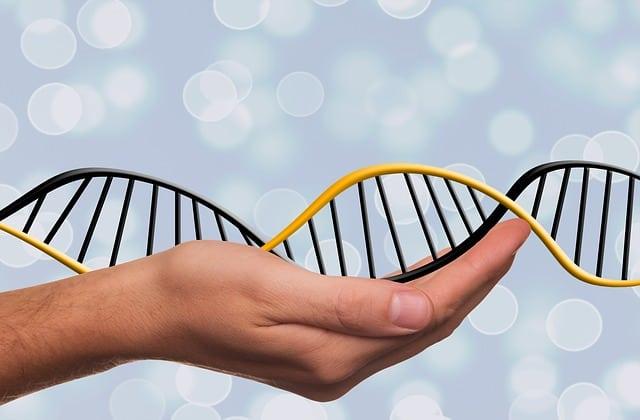 Life DNA