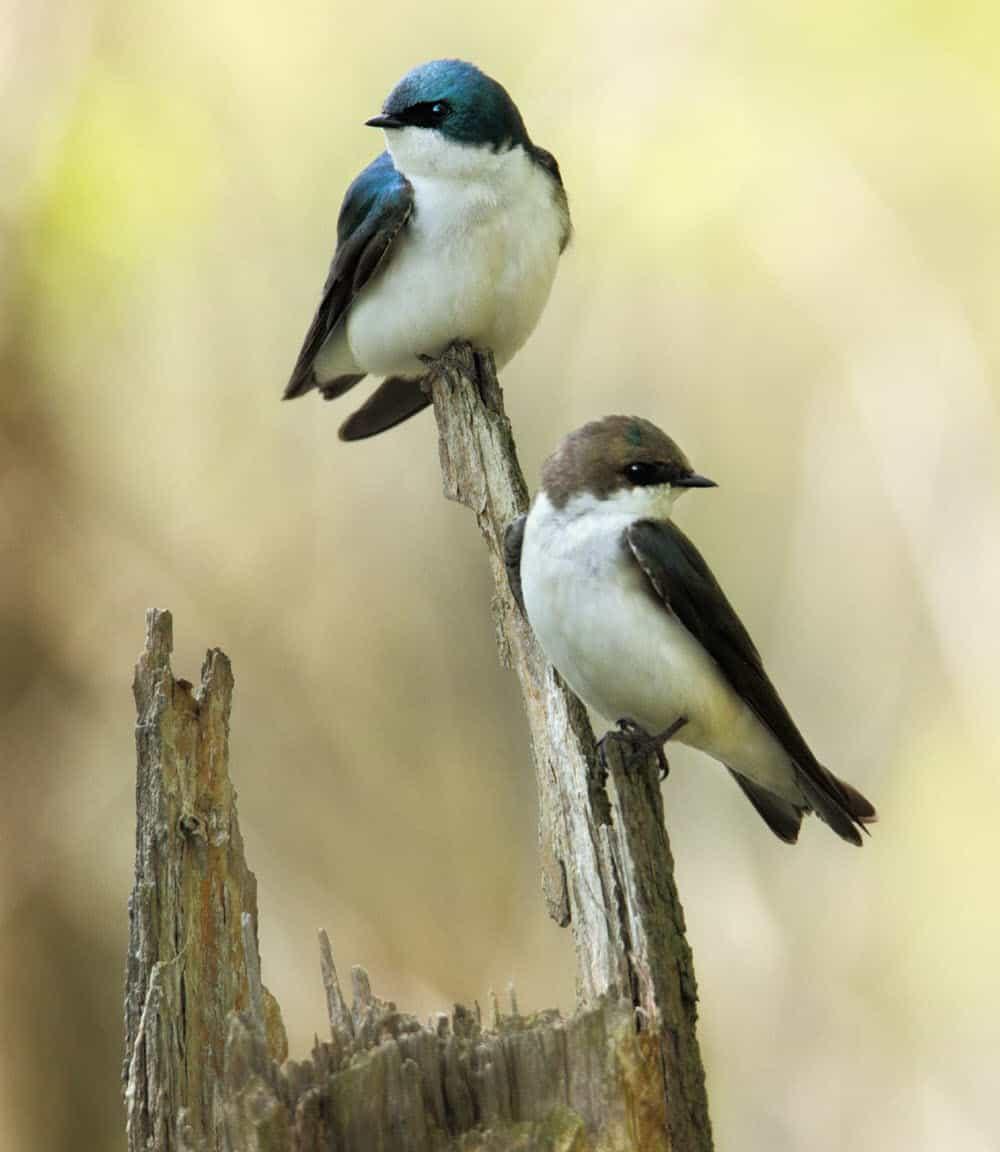 The grace of birds