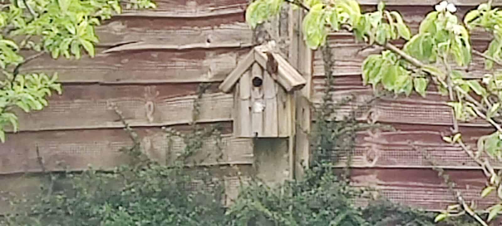 Unknown bird nesting
